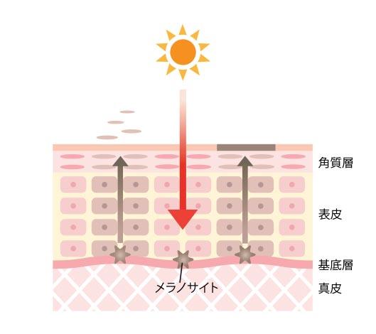 紫外線が頭皮、髪に影響を及ぼすイラスト