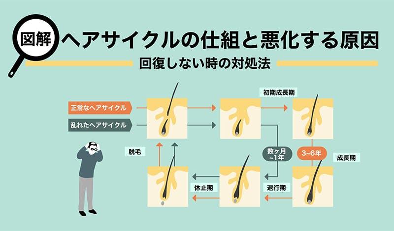 【図解】ヘアサイクルの仕組みと悪化する理由~回復しないときの対処法